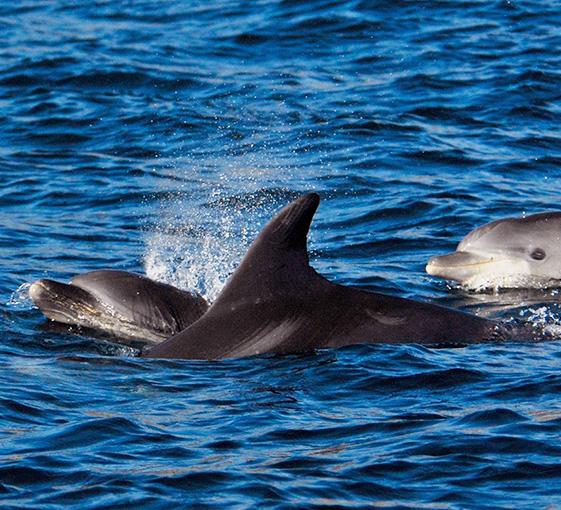Lisbon-Dolphin-watching tour