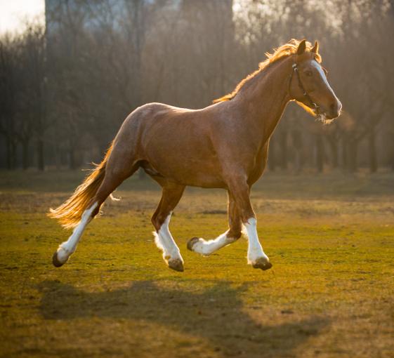 balade cheval barcelone