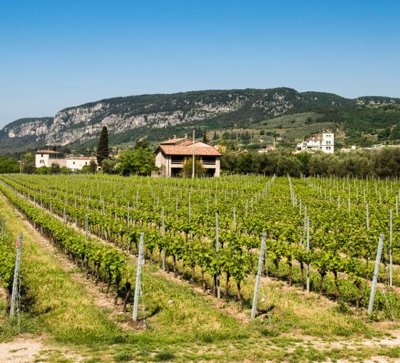 Private tour around wine in Valpolicella from Venice