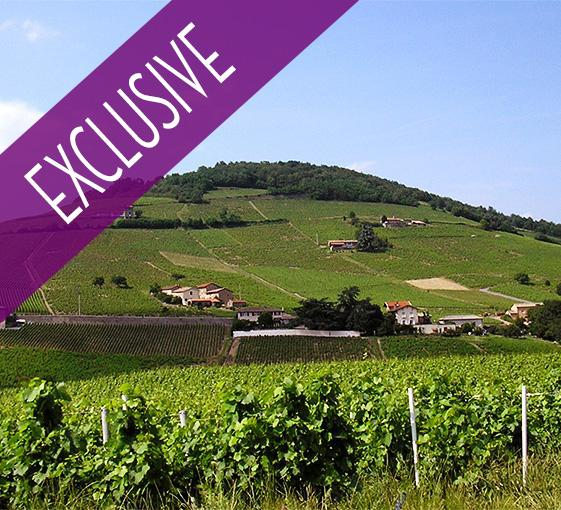 Private tour in Beaujolais and wine tasting