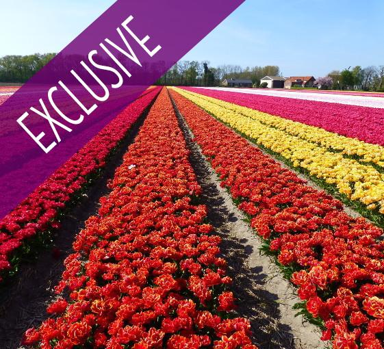Private tour in Keukenhof and the biggest flowers exhibition in the world