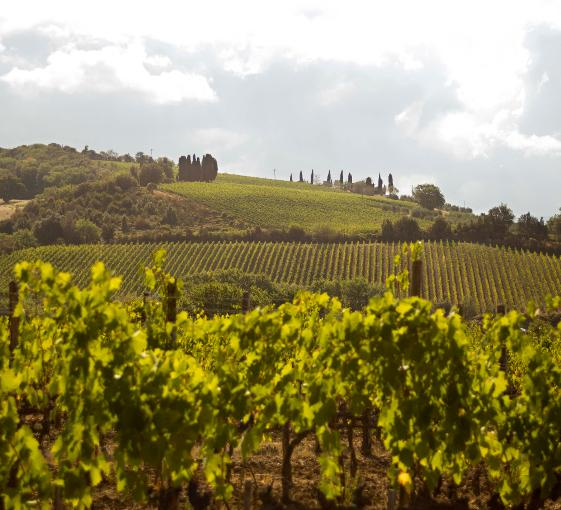 Private tour with a tasting of bidynamic italian wine in Tuscany from Florence